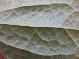 Leaf macro II by TCJstock