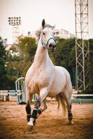 Mane is in the air by juliabfragoso