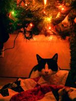 A Very Merry Catmas by Champineography