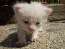 My Cat Oliver as a Kitten by olivia808