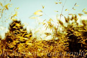 Meadow Grass by Britwitch-1981