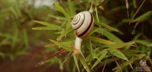 travel of a snail 001 by Bheeshoom