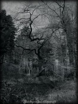 Tortured Tree IV by CountessBloody