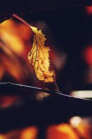 Colors of Autumn by Naomiroe