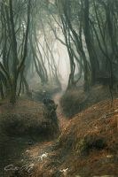 Path by sweetdesires