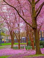 Spring in Portland 2 by catilakbluez