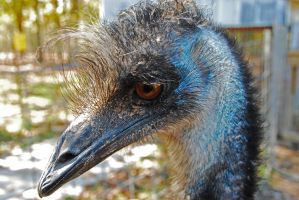 Emu Ready for Close Up by GONE-EVERLONG