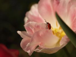Red Bug Again by Fraped