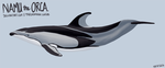 Pacific white-sided dolphin swimming animation by namu-the-orca