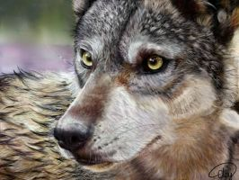 Wolf Digital Painting bigger by FireLioness