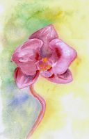 Watercolour Orchid 2 by LilithDarck