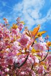 Blooming tree by Antivuskning