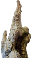 Gnarled Trunk by RD-Stock