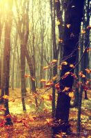In the real magical wood by XanaduPhotography