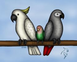 Parrot Trio by theAnsu