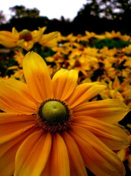 Yellows and Greens by linowyn