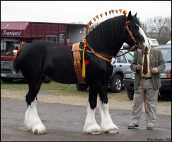 Shire Horse Show: Stallion 2 by ladyepona