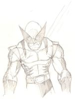 Wolverine Sketch by joebananaz