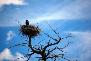 Eagle Nest by LordXar