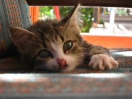 kitten on porch 2 by FreakQuency85