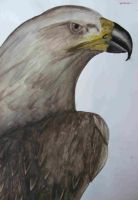 Golden Eagle by Leatherfeet
