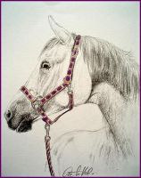 Drawing- horse by Ennete