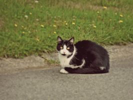 Mrow mrow by Nuce-Photography