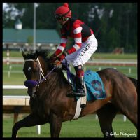Thoroughbred by xThoroughbred