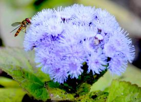 Bee on flower by Cayasha