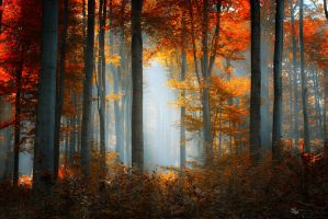 The best days by ~ildiko-neer