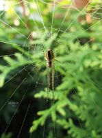 Little spider by GreenSlOw
