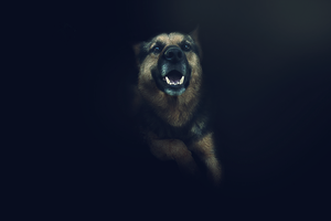 Dog wallpaper by T3hSpoon