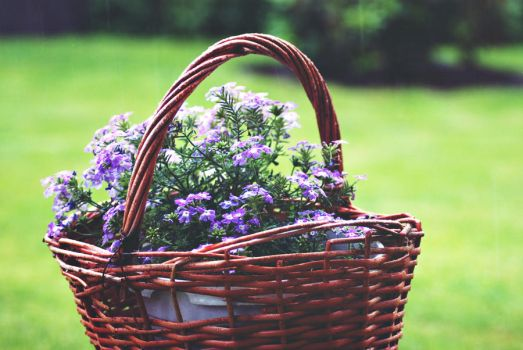 basket of raindrops by jnac