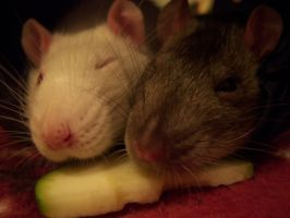 Rats n Rats n Rats For Love by MushroomTurtle