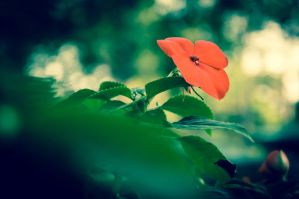 Flower by KAWILE