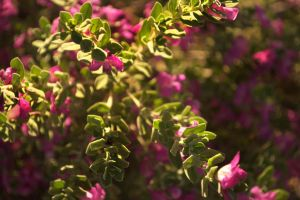 Flowers in Bloom from Above by scarecrowmax