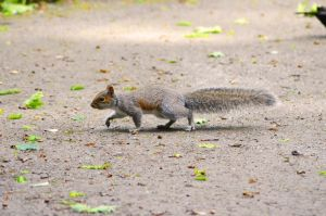 Squirrel in the park by Missmith91