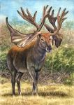 Cervalces scotti, the Stag-Moose by WillemSvdMerwe