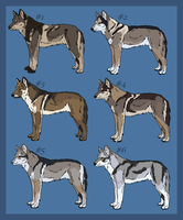 Saarloos wolfdog imports - OPEN by PikYourPup-Shelter
