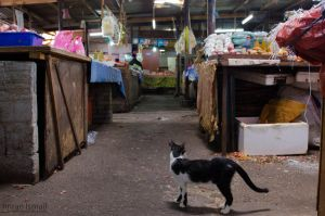 Market cat by DISC-Photography