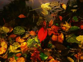 mixed color of leafs in water by rockmylife