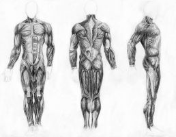 Muscles of the Body by arvalis