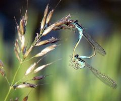 Dragonfly passion by Drakenborg