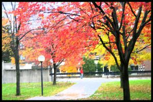 Campus -scape 2 by Nariane