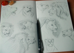 A page of lions by Fourth-Star