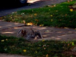 Squirrelly Family by nicktanski