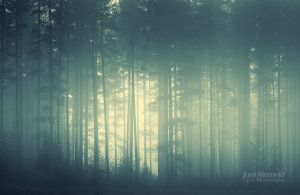 Foggy Forest by Nitrok