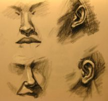Facial Features Study by PRATT-FACE