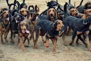 Bloodhounds by KirstenLindeboom
