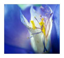 spring touch by CrisBee